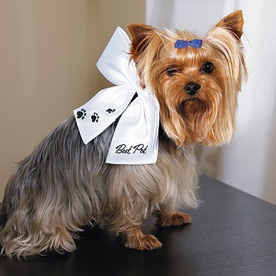 Wedding Ceremony Best Pet Bow